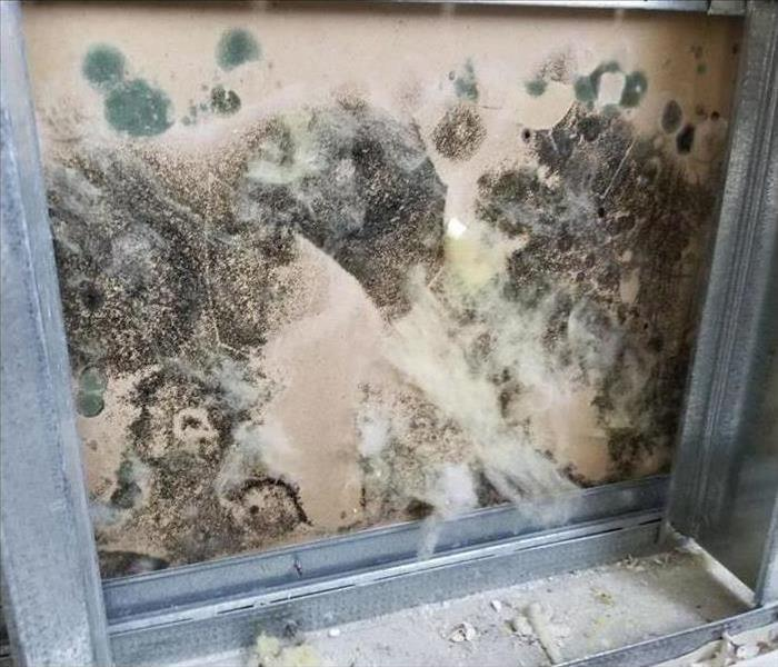 Mold in a school wall
